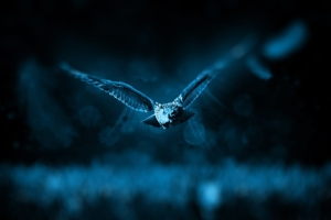 Foto naturalistica notte